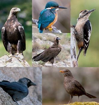 Alpedrete celebra el Día de las Aves con una nueva guía de la biodiversidad