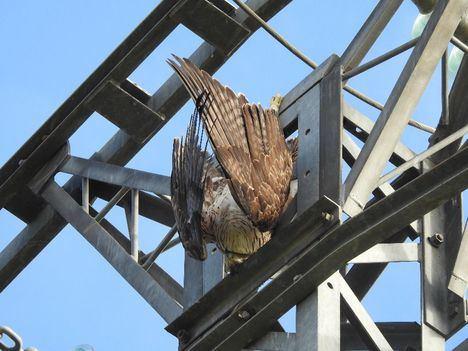 GREFA y los ingenieros se unen para evitar la electrocución de aves