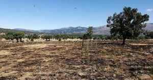 Moralzarzal anuncia el cierre nocturno de la Dehesa Vieja para evitar incendios