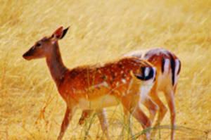 La fauna ibérica en imágenes