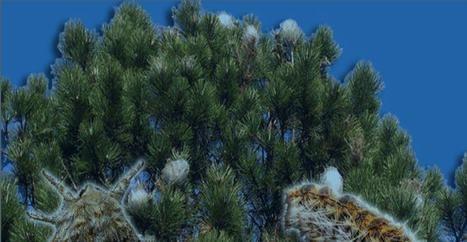 El 2 de septiembre se abre la inscripción para la Campaña de control de la procesionaria del pino