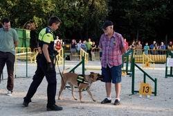 Ciudadanos caninos obedientes